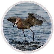 Reddish Egret Egretta Rufescens Round Beach Towel