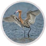 Reddish Egret Fishing Round Beach Towel