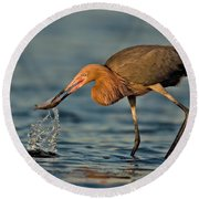 Reddish Egret Strike Round Beach Towel