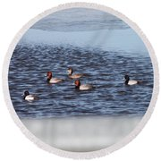Redhead And Scaups Ducks Round Beach Towel