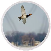 Redhead Duck Over Harsens Island Michigan Round Beach Towel