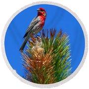 Redheaded Tree Topper Round Beach Towel