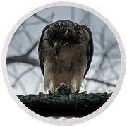 Redtail Hawk And Mouse Round Beach Towel