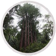 Redwood Fairy Ring Far Round Beach Towel