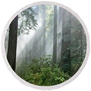 Redwood Forest With Sunbeams Round Beach Towel