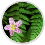Redwood Sorrel Wildflower Nestled In Ferns Round Beach Towel