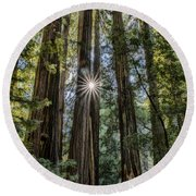 Redwoods Round Beach Towel