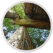 Redwoods Forest Art Prints Canvas Framed Redwood Trees Round Beach Towel