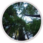 Redwoods II Round Beach Towel
