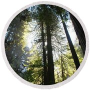 Redwoods IIII Round Beach Towel