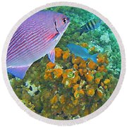 Reef Life Round Beach Towel by John Malone