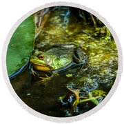 Reflections Of A Bullfrog Round Beach Towel