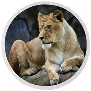 Reflections Of A Lioness Round Beach Towel