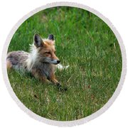 Relaxing Red Fox Round Beach Towel