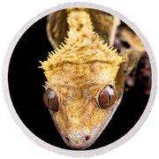 Reptile Close Up On Black Round Beach Towel