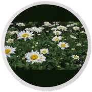 Requested Daisies Round Beach Towel