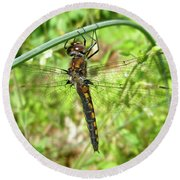 Resting Brown Dragonfly Round Beach Towel