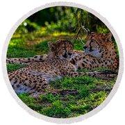 Resting Cheetahs Round Beach Towel