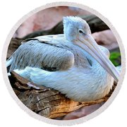 Resting Great White Pelican Round Beach Towel