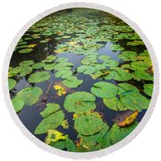 Resting Lilly Pads Round Beach Towel