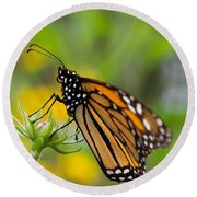 Resting Monarch Butterfly Round Beach Towel