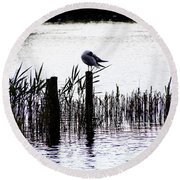 Resting Seagull  Round Beach Towel
