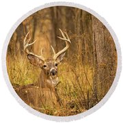 Resting White-tailed Deer Buck Round Beach Towel