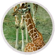 Reticulated Giraffe And Calf Round Beach Towel