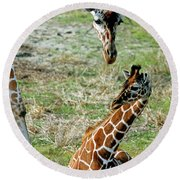 Reticulated Giraffe With Calf Round Beach Towel