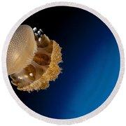 Rhizostome Jellyfish, Tulamben, Bali Round Beach Towel