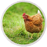 Rhode Island Red Chicken Round Beach Towel