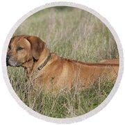 Rhodesian Ridgeback Dog Round Beach Towel