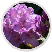 Rhododendron In The Morning Light Round Beach Towel