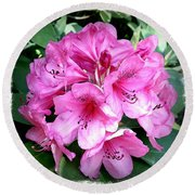 Rhododendron Square With Border Round Beach Towel