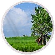 Rice Fields Round Beach Towel by Nila Newsom