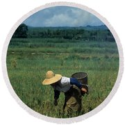 Rice Harvest In Southern China Round Beach Towel