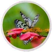 Rice Paper Butterflies Round Beach Towel