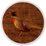 Ring Neck Pheasant  Round Beach Towel