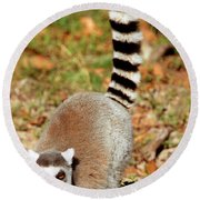 Ring-tailed Lemur Lemur Catta Walking Round Beach Towel