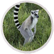 Ring-tailed Lemur Round Beach Towel