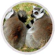 Ring-tailed Lemurs Lemur Catta Round Beach Towel