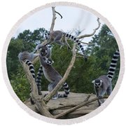 Ring Tailed Lemurs Playing Round Beach Towel