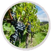 Ripe Grapes Right Before Harvest In The Summer Sun Round Beach Towel