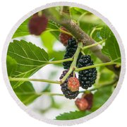 Ripe Mulberry On The Branches Round Beach Towel