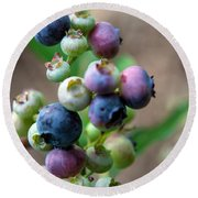 Ripening Blueberries Round Beach Towel