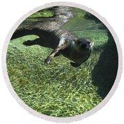 River Otter-7714 Round Beach Towel