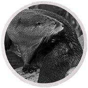River Otter In Black And White Round Beach Towel