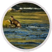 River Otter On A Rock Round Beach Towel