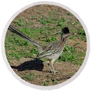 Roadrunner Male With Food Round Beach Towel