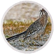 Roadrunner With Lizard Round Beach Towel